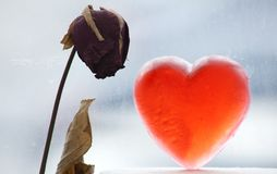 Rainy Heart and Wilted Flower Stock Images
