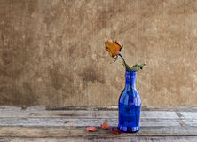 Dry rose in blue bottles on wooden background Stock Photos