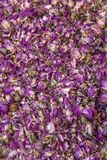 Dry rose buds Royalty Free Stock Photos