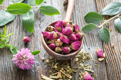 Dry rose flower buds Stock Photography