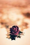 dry rose flower with golden stars Stock Photo