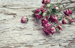 Dry rose flowers frame on old wooden background Stock Image