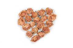 Dry rose flowers heart isolated on white background. Valentine. Stock Images