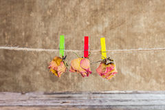 Dry rose hanging on line on wooden background Royalty Free Stock Photography