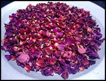 Dry Rose Leaves royalty free stock photos