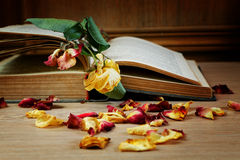 Dry rose and the old book Stock Image