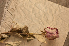 Dry rose on old creased paper Royalty Free Stock Image