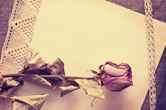 Dry rose on old paper Royalty Free Stock Photography