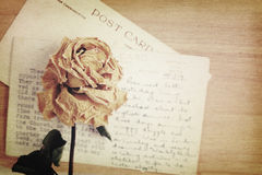 Dry rose and old postcard with handwritten. Soft light vintage s Royalty Free Stock Image