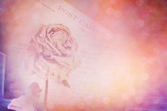 Dry rose and old postcard. Lens flare and bokeh effect, vintage Stock Images