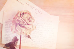 Dry rose and old postcard. Soft light and flare effect, vintage Royalty Free Stock Images