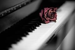 Dry rose over grand piano keys Royalty Free Stock Photos