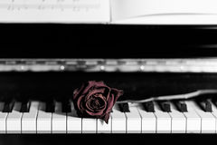 Dry rose over grand piano keys Royalty Free Stock Images