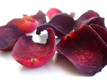 Dry rose petals Royalty Free Stock Images
