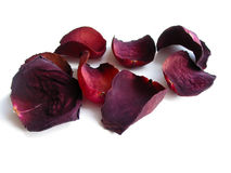 Dry rose petals stock photography