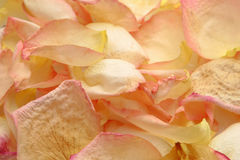 Dry rose petals Royalty Free Stock Photography