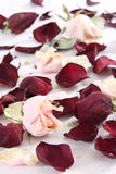 Dry rose and petals Royalty Free Stock Image
