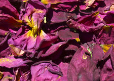 Dry rose petals. Background of dried rose petals royalty free stock images