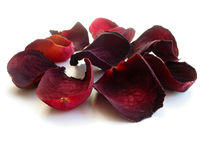 Dry rose petals on white. Dry red rose petals isolated on white background, closeup stock photo