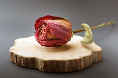 Dry Rose and piece of wood on black background.  Royalty Free Stock Photo
