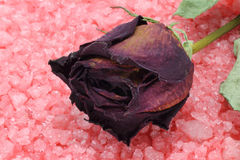 Dry rose on a sea salt Royalty Free Stock Photography