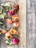 Dry rose on wooden background Stock Images