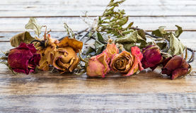 Dry rose on wooden background Royalty Free Stock Photography