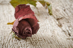 Dry Rose on Wooden Background Royalty Free Stock Image