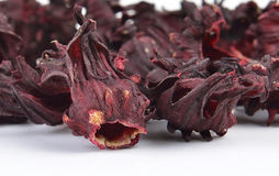 Dry roselle isolated on white background Stock Photos
