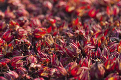 Dry roselle Royalty Free Stock Images