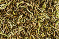 Dry rosemary leaves and caraway seeds. Royalty Free Stock Photos