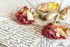 Dry roses Royalty Free Stock Photos