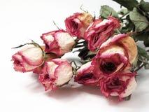 Dry Roses Stock Photos