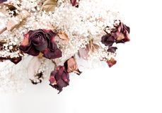 Dry roses. Bouquet of dead roses, isolated on white Stock Photography