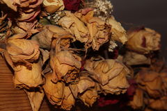 Dry Roses. Dry white roses in my living Royalty Free Stock Photography
