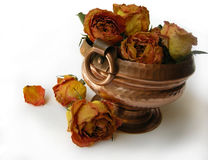 Dry Roses 75 in ethnic pot Royalty Free Stock Photo