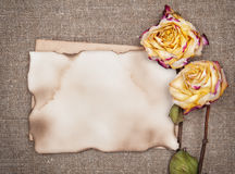 Dry roses and aged paper on the burlap Stock Images