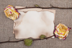 Dry roses and aged paper on the burlap Royalty Free Stock Photography