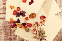 Dry roses,amber on ancient empty photographs. Vintage background. Stock Photos