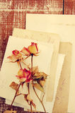 Dry roses on ancient empty photographs . Vintage background. Royalty Free Stock Photo