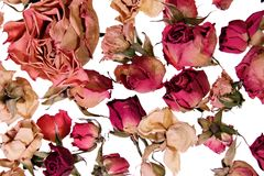 Dry roses background for memories Stock Photo