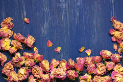 Dry roses background Stock Photography
