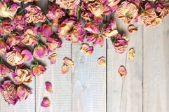 Dry roses background Royalty Free Stock Photo