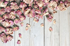 Dry roses background Royalty Free Stock Images