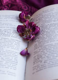 Dry roses and a book Royalty Free Stock Photography