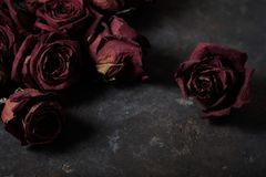 Beautiful dry roses. Dry roses on a dark background stock photo