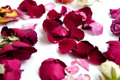 Dry roses flower on white background Stock Image