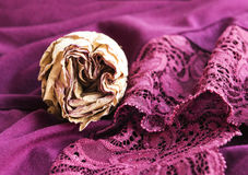 Dry roses and lace. Etude in purple: dried rose and lace Royalty Free Stock Image
