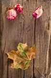 Dry roses and maple leaf on old wooden background Royalty Free Stock Images