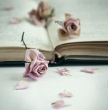 Dry roses and old book. Royalty Free Stock Photo